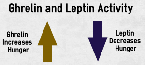 Leptin Vs. Ghrelin