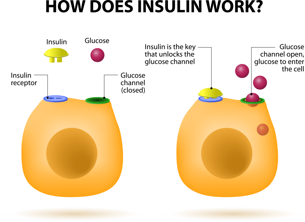 Insulin and Sugar